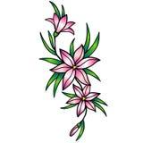 Lírios cor-de-rosa stylization Lírios, flores com folhas A lápis desenho com um inclinação imagens de stock