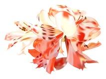 Lírios das rosas Ilustração do Vetor