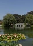 Lírios de água no jardim chinês Foto de Stock Royalty Free
