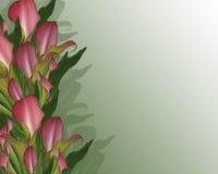 Lírios de Calla fundo ou beira Foto de Stock Royalty Free