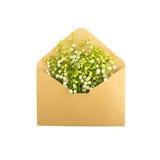 Lírios do vale no envelope, isolados no branco fotografia de stock royalty free