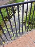 Lírios e grama verdes na água Fotografia de Stock Royalty Free