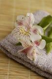 Lírios em uma toalha Foto de Stock