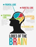 Lóbulos del cerebro Diseño del vector de Infographic Fotos de archivo libres de regalías