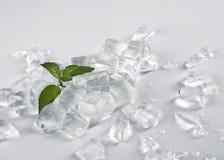Lód i roślina Fotografia Stock