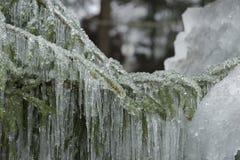 Lód na gałąź 3 zdjęcia royalty free