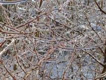 Lód na gałąź drzewo zdjęcie royalty free