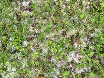 Lód na trawie Obrazy Royalty Free