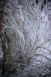 Lód Pokrywająca roślina fotografia stock