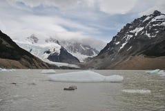 Lód unosi się w Laguna Torre Zdjęcie Royalty Free