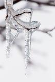 Lód z gałąź obraz royalty free