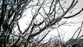 Lód zakrywał drzewa Obraz Stock