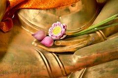 Lótus à disposicão de buddha Fotografia de Stock