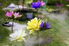 Lótus coloridos plásticos da decoração na lagoa, Taipei Fotos de Stock