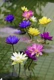 Lótus coloridos plásticos da decoração na lagoa, Taipei Foto de Stock