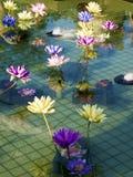 Lótus coloridos plásticos da decoração na lagoa, Taipei Fotografia de Stock Royalty Free