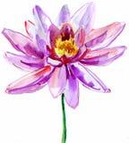 Lótus cor-de-rosa ilustração royalty free