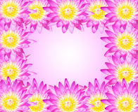 Lótus cor-de-rosa ilustração stock
