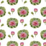 Lótus da flor do teste padrão Fotografia de Stock