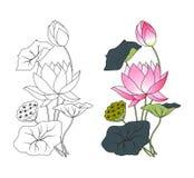 Lótus de florescência, colorindo Imagens de Stock Royalty Free