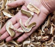 Lögnen för torkade champinjoner på rätt gömma i handflatan Arkivbilder