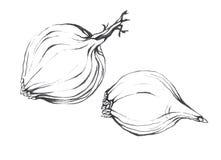 Lök Hand dragen svartvit illustration Arkivfoto
