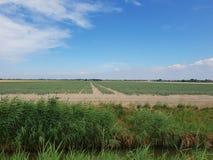 Lökfält i den Wilde Veenen polder i Waddinxveen Nederländerna royaltyfri bild