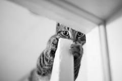 Lömsk katt Royaltyfria Bilder