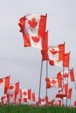 lönn för Kanada flaggaleaf Royaltyfria Foton