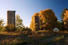 Lönnar och silos Royaltyfria Bilder