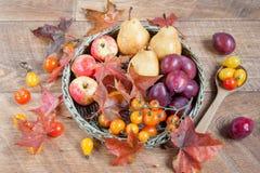 Lönnblad, äpplen, päron och andra gåvor av naturen Arkivfoton