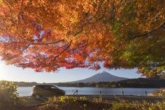 Lönnlövändring till höstfärg på Mt fuji japan mt Arkivbilder