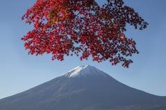 Lönnlövändring till höstfärg på Mt fuji japan mt Fotografering för Bildbyråer