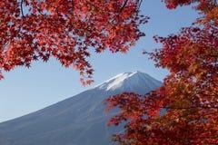 Lönnlövändring till höstfärg på Mt fuji japan mt Royaltyfri Bild