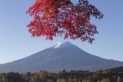Lönnlövändring till höstfärg på Mt fuji japan mt Arkivfoto