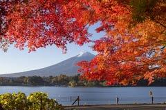 Lönnlövändring till höstfärg på Mt fuji japan mt Arkivfoton