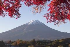Lönnlövändring till höstfärg på Mt fuji japan mt Royaltyfria Bilder