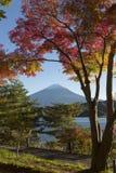 Lönnlövändring till höstfärg på Mt fuji japan mt Royaltyfri Fotografi