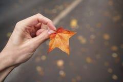 Lönnlöv för håll för POV-manhand orange, medan gå i stad Arkivfoton
