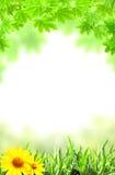 Lönnlöv och grönt gräs Arkivfoto