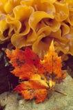 Lönnlöv och svamp Fotografering för Bildbyråer