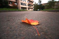Lönnlöv på asfalt Arkivfoto