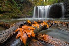 Lönnlöv på trädjournal på gömda nedgångar i Oregon USA royaltyfri fotografi
