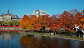Lönnträd i gammal port av Montreal royaltyfria foton