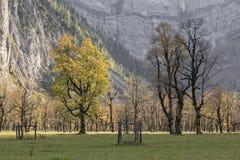 Lönnträd i höst Royaltyfri Foto