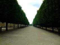 Lönnträd på den Tuileries trädgården, Paris, Frankrike Arkivfoto