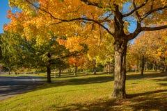 Lönnträdet i höst färgar i Montreal, Kanada Royaltyfria Foton