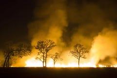 Löpeld - det brinna skogsekosystemet förstörs royaltyfri foto