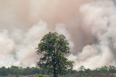Löpeld - det brinna skogsekosystemet förstörs royaltyfria foton