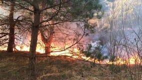 Löpeld skogsbrand, fältbrand, lager videofilmer